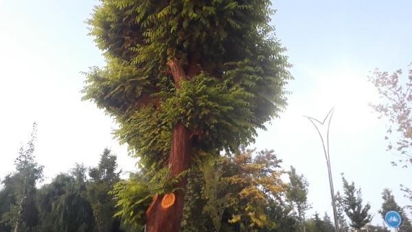 Ağaç kesen esnafa 50 bin TL'lik ceza